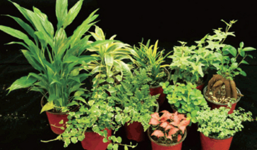 스파티필럼, 푸밀라고무나무, 드라세나 산데리아나, 상록넉줄고사리, 크로톤, 피토니아'핑크스타',미니 페페로미아,필레아 글라우카, 아이비, 인삼벤자민(Ficus retusa)사진