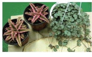 착생형 식물디자인 실제 만들어보기 과정 사진 2
