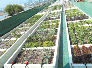 다양한 옥상텃밭 작물재배