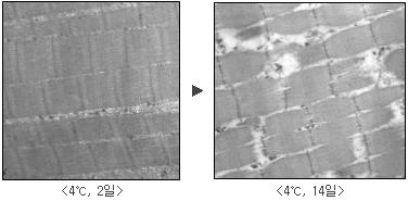 4℃로 2일 숙성된 한우고기와 4℃로 14일 숙성된 한우고기 비교 사진
