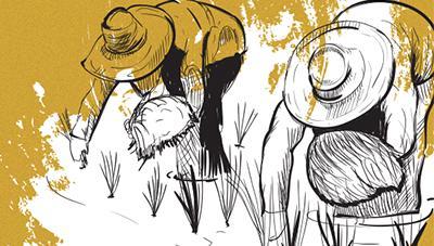 고품질 쌀 생산을 위한 벼농사 중간 물관리 요령