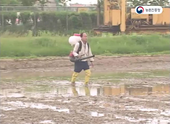 벼 담수직파 재배