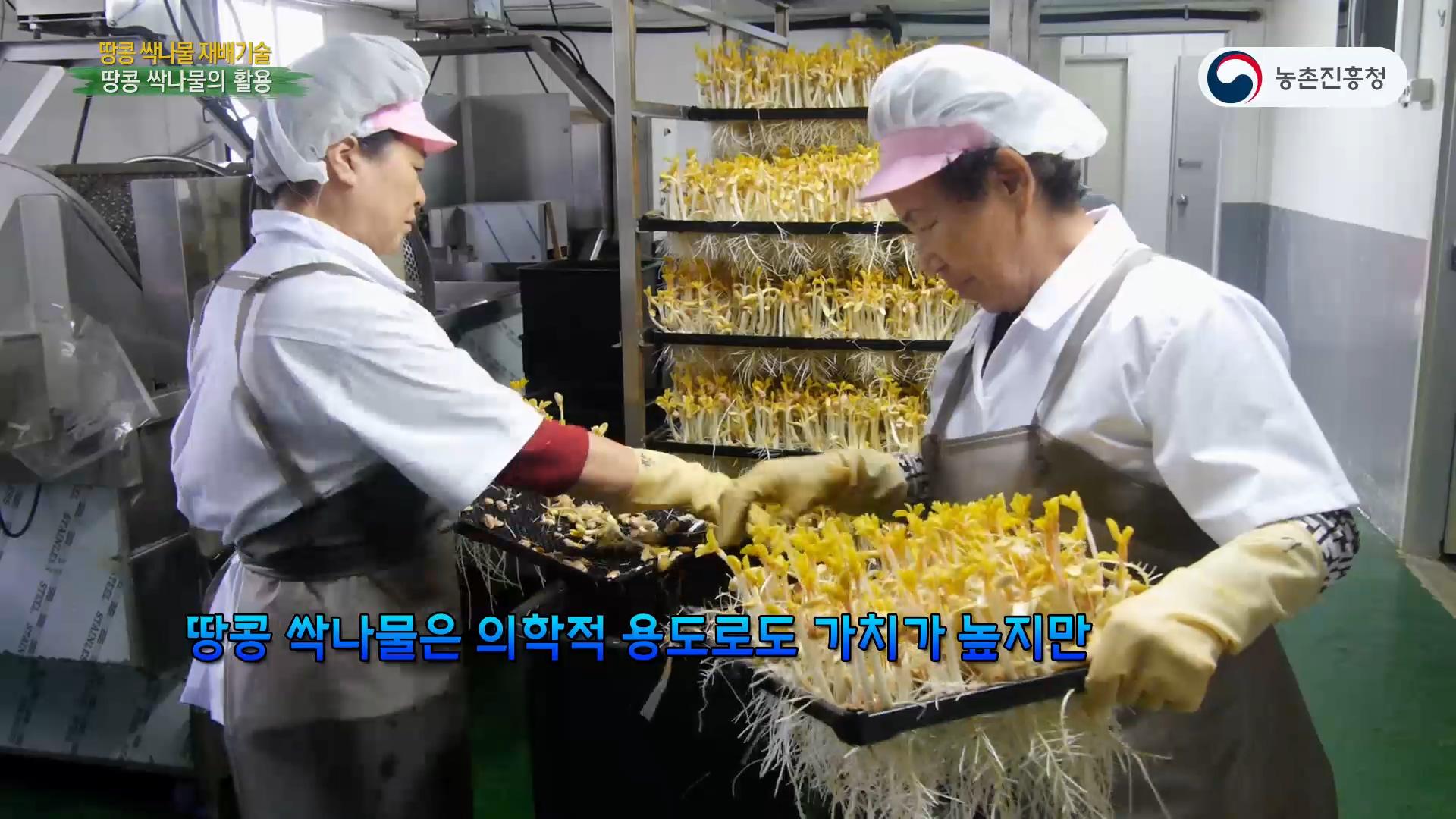 동영상 썸네일 이미지 :땅콩 싹나물 재배기술