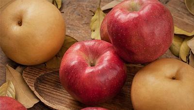 배·사과 화상병 예방이 중요합니다.