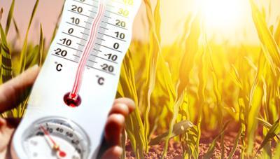 여름철 폭염에 농작물 관리 대책 낮 시간대에는 농작업 절대 중단