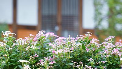 가꾸고 즐기고 함께하는 농촌마을 정원을 꿈꾸며