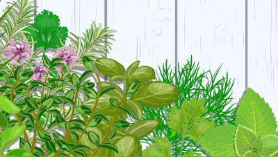 겨울철 집에서 약용식물 키워보세요