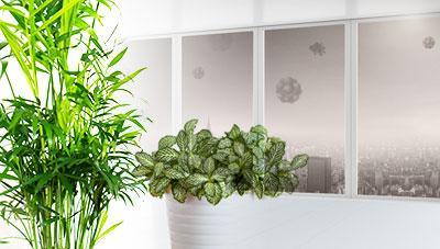 미세 먼지 먹는  천연 공기청정기 초록잎 식물 키우세요