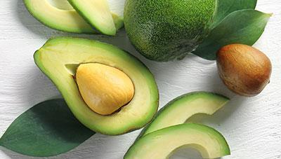 숲속의 버터라 불리는 영양과일 아보카도 재배법