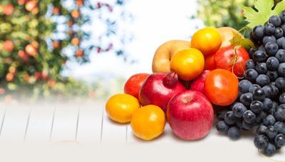 과실 품질을 높이기 위한 수확 전 관리 및 수확기 판단 방법