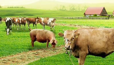 건강한 가축 관리 요령