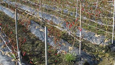 채소·과수 제거, 수확기 이후 병든 식물은 바로 치워주세요