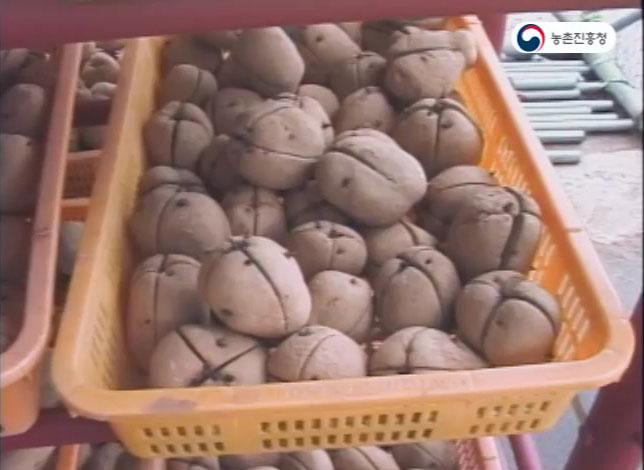 감자재배기술
