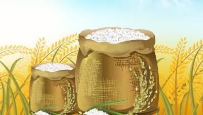 밥맛을 크게 좌우하는 벼 흰잎마름병 줄이는 방법