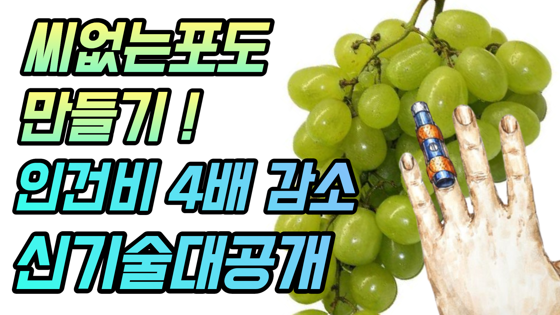 (with 귀농의신) 포도 생장조정제 처리표식기