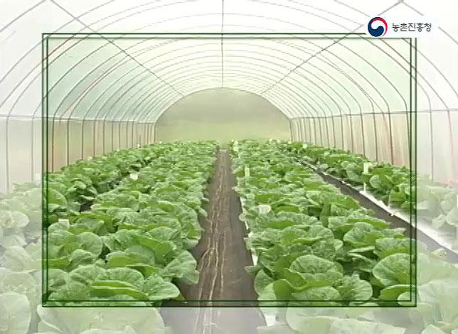 동영상 썸네일 이미지 :고랭지배추의 방충비가림 재배