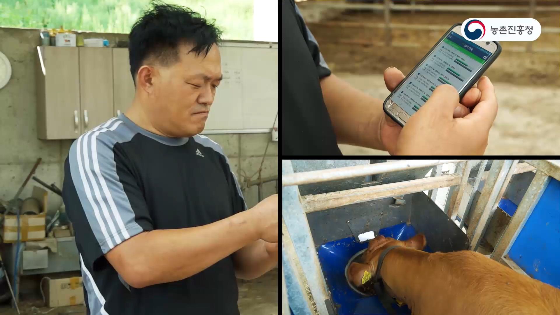 새창열림_ICT 융복합 한우, 젖소 스마트팜