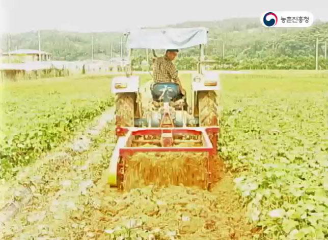 고구마 기계 수확