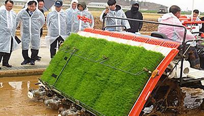 벼 재배비용과 노동력 절감을 위한 소식재배 기술