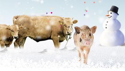 겨울철 가축 질병과 예방법