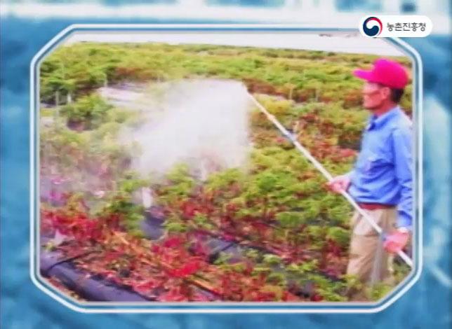 동영상 썸네일 이미지 :고추 주요 병해충 방제