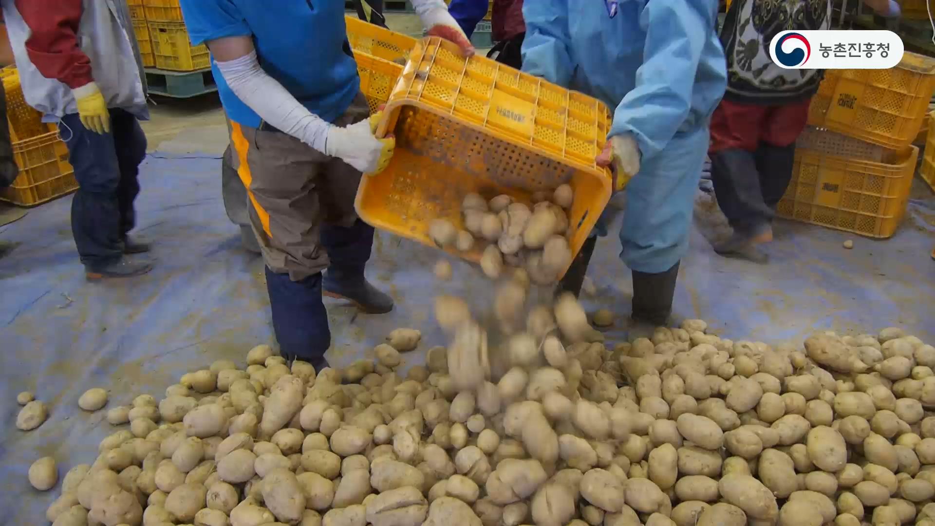 감자수확 후 관리요령