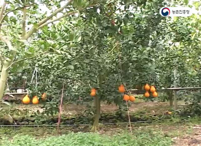 고품질 부지화생산을 위한 분할수확