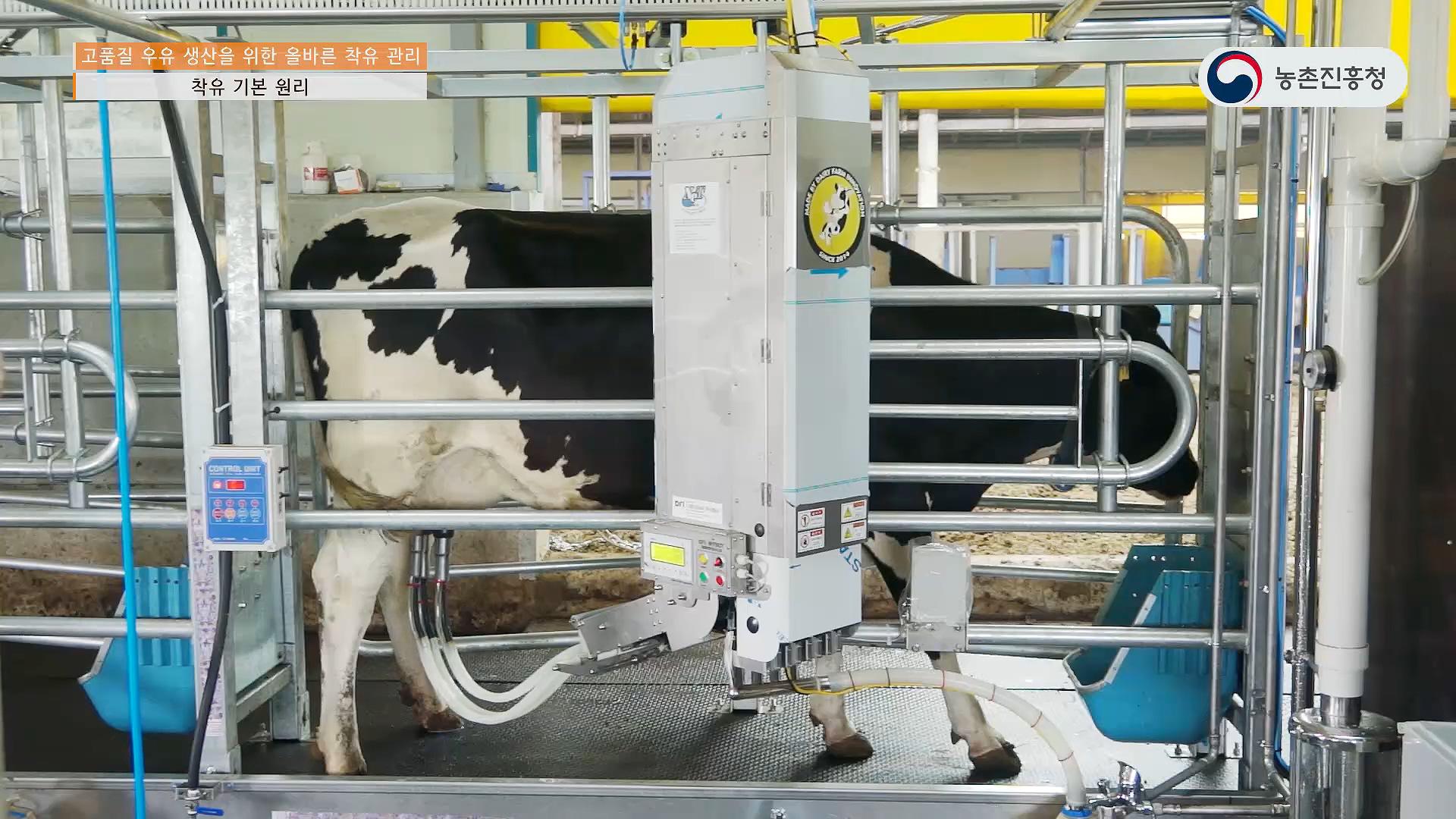 새창열림_고품질 우유 생산을 위한 올바른 착유 관리