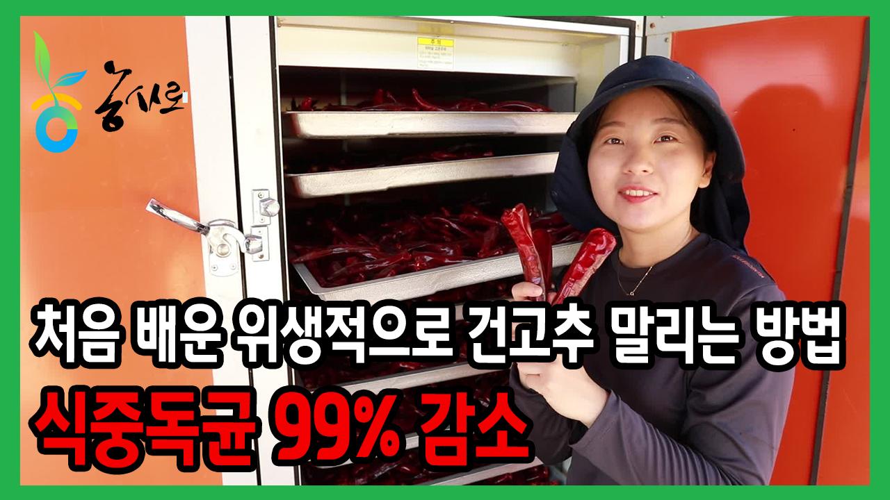 (with 청양농부참동TV) 처음배운 위생적으로 건고추 말리는 방법