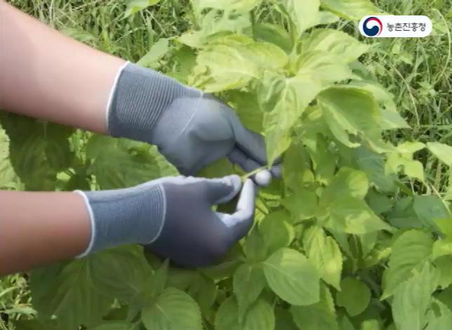 개량 순잎따기 장갑과 밭 작업화