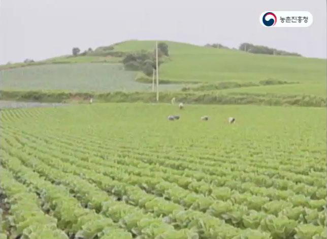 동영상 썸네일 이미지 :고랭지 배추 재배기술