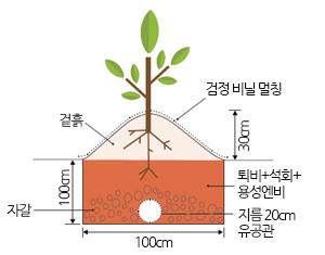 나무를 심는 구덩이와 심는 방법