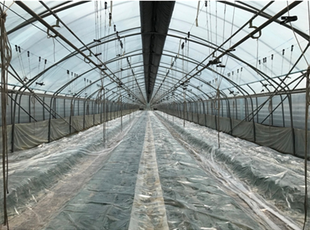 태양열을 이용한 토양소독 방법