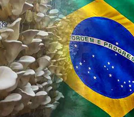 국산 버섯, 브라질 수출 길 열려