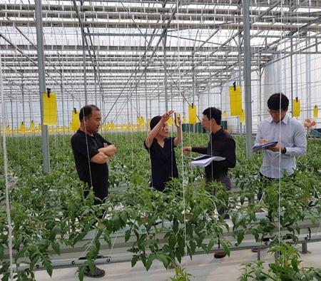 토마토 수출 지원을 위한 베트남검역관 초청 사업 실시