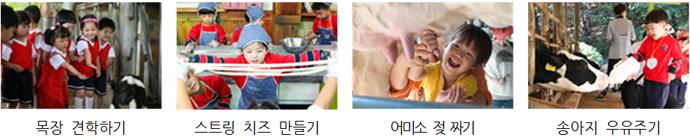 목장 견학하기, 스트링 치즈 만들기, 어미소 젖 짜기, 송아지 우유주기